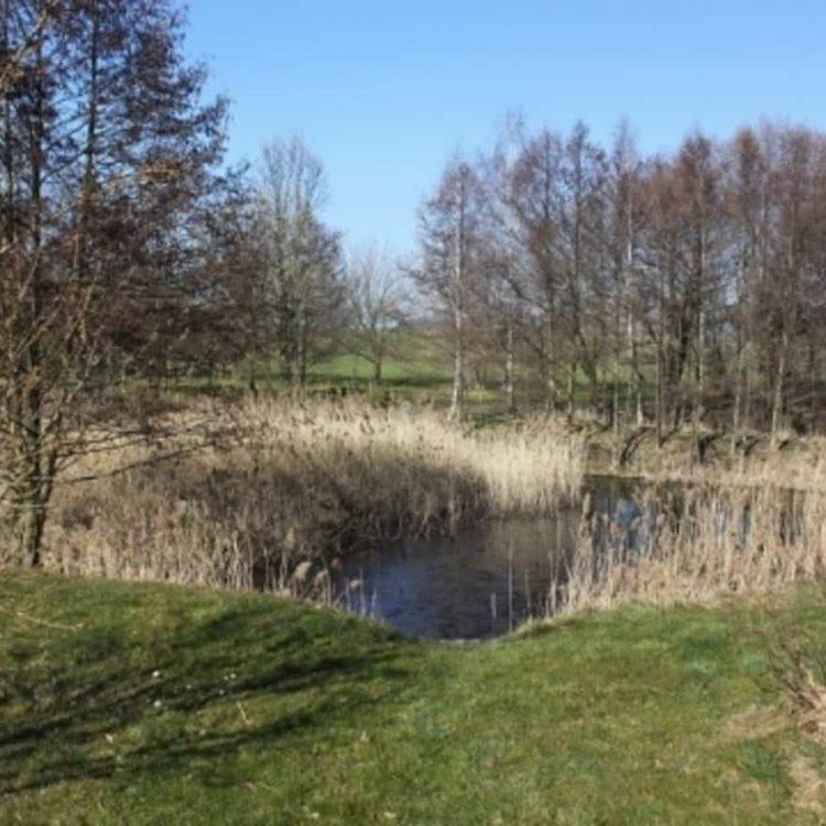 Baugrundstück-Schönefelder-Hochland